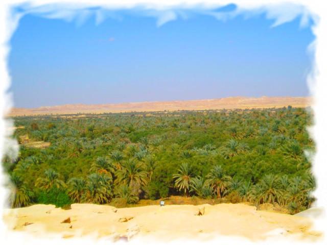 Развлечения в Египте - оазис Сива