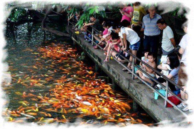 Обман туристов в Таиланде 3