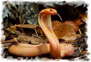 Змеи Таиланда. Правила поведения при укусе