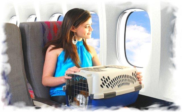 В самолете можно провозить кота