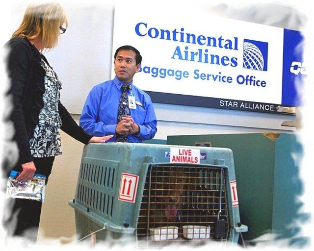 Правила перевозки животных в самолете 3