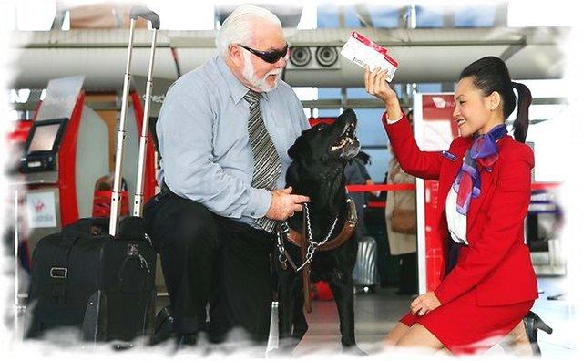 Правила перевозки животных в самолете 5