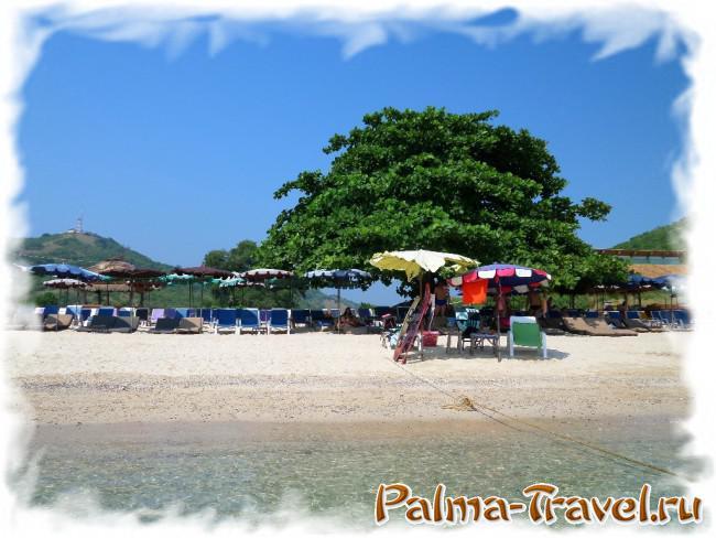 Пляж Манки Бич на Ко Лане -  вид со стороны моря на тенистое дерево