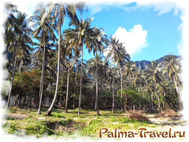 Пляж Тонсай (полуостров Рейли) - пальмовая роща в центральной части