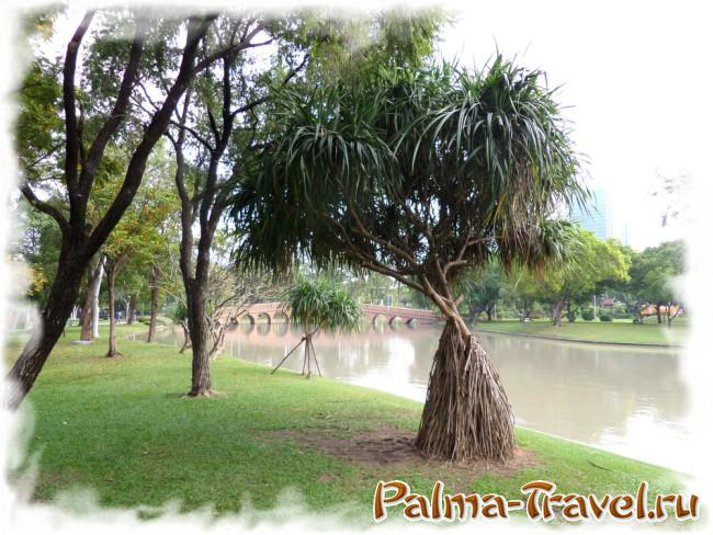 Chatuchak Park in Bangkok - the original tropical trees near the water