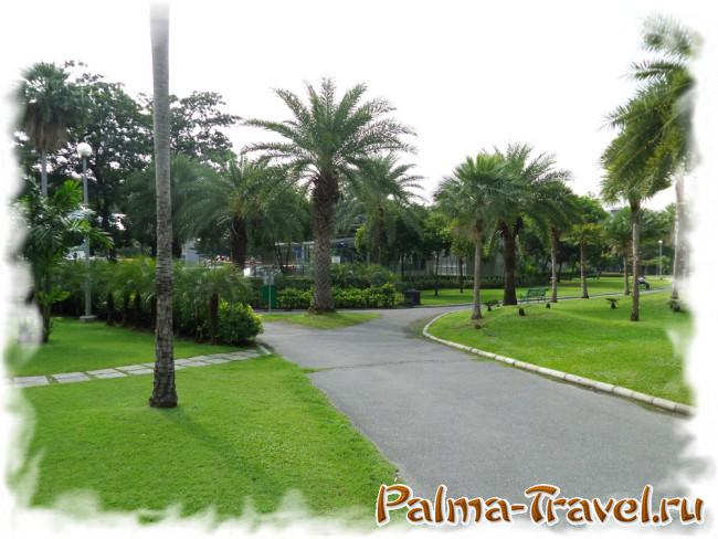 Chatuchak Park in Bangkok - palm trees and paths