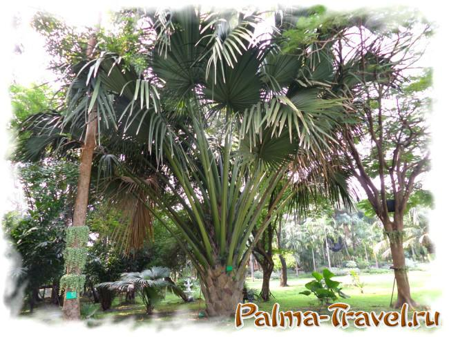 Different types of trees in the park Queen Sirikit
