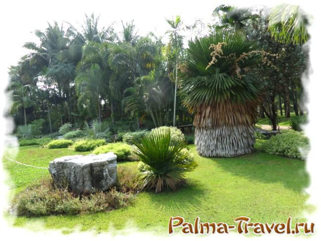 View of part of the palm grove in the park Queen Sirikit
