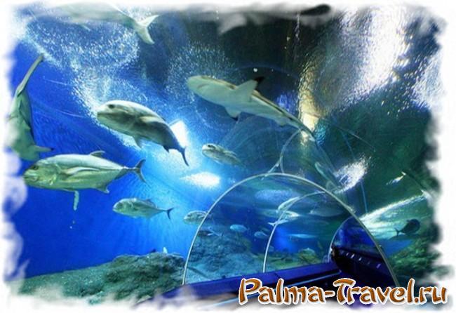 Underwater World Pattaya - 100 метровый тоннель