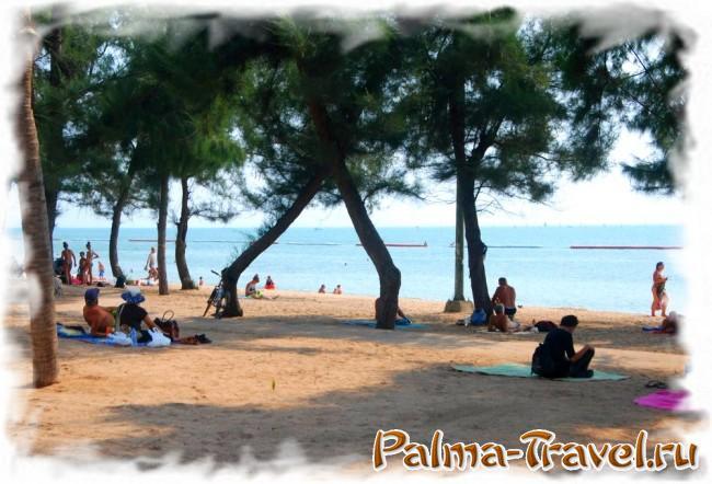 Казуариновые деревья на пляже Донгтан в Паттайе