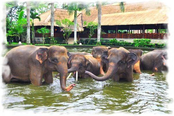 veb-kamara-bali-prud-so-slonami-v-safari-parke