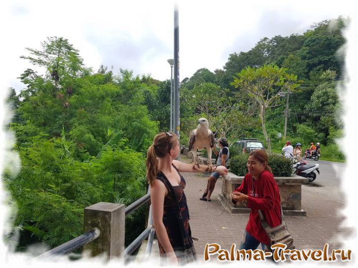 Парковка возле Karon Viewpoint и орел, с которым можно сфотографироваться