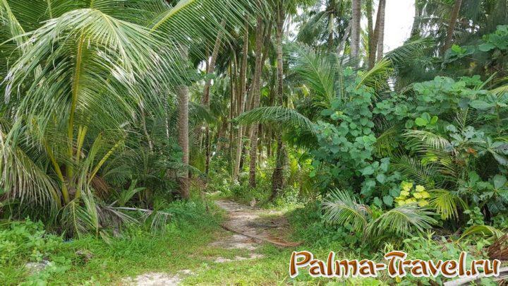 Множество пальм и других тропических растений - причина полюбить Таиланд