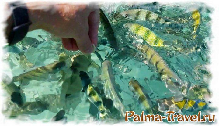 Кормление рыбок с руки на острове Ko Yuak